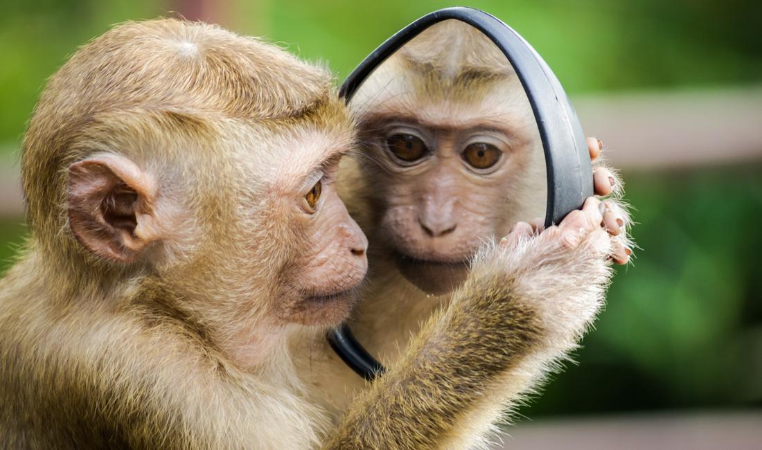monkey brain engaging buyers