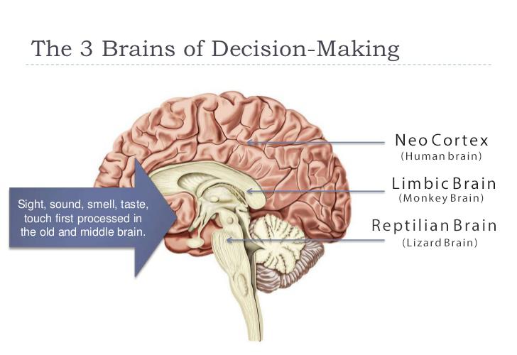 engaging 3 brains of evolution