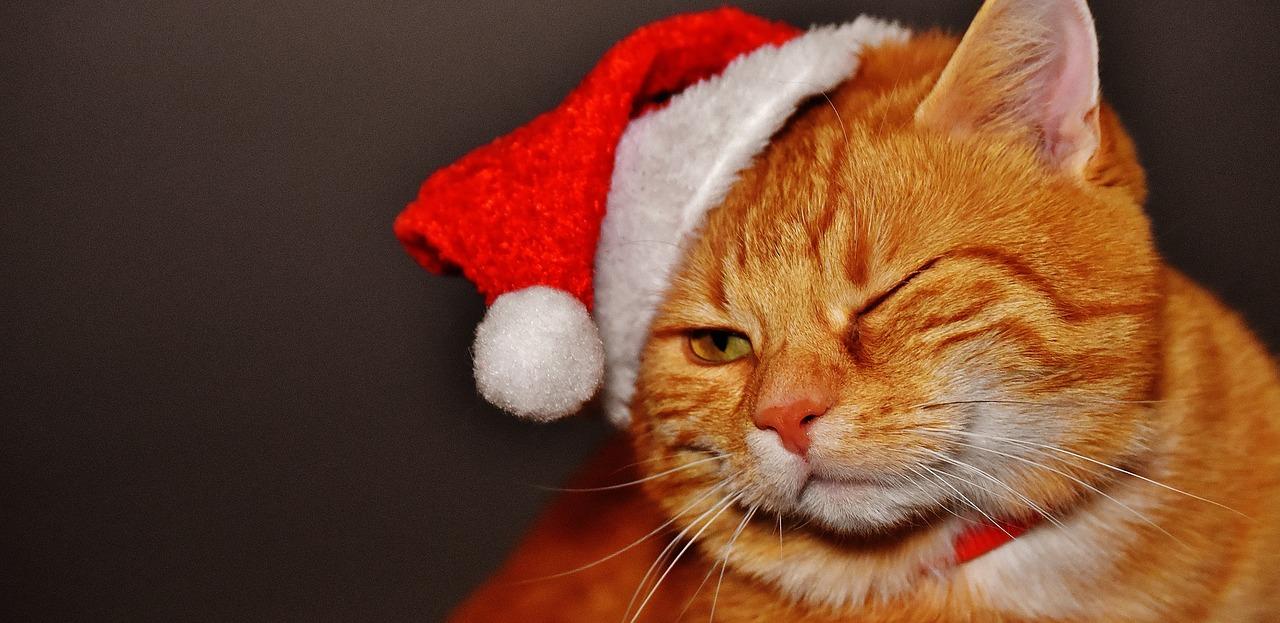 Drunk Christmas Cat
